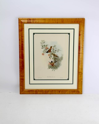 Framed Print Entitled Helianthea Eos