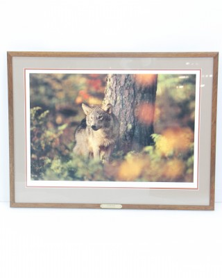 Autumn Wolf Jim Brandenburg Print